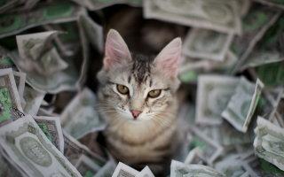 Полцарства за кота или кто самый дорогой?