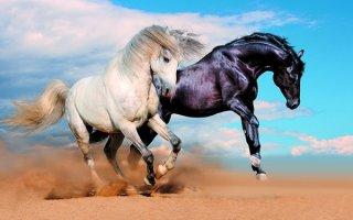 Все о беге лошади: разбираем различные виды