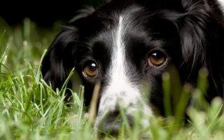 Помогаем собаке с болезнями опорно-двигательного аппарата
