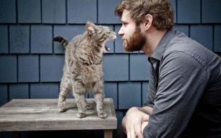 Основы дрессировки котов, кошек и котят