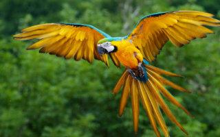 Лучшие попугаи для домашнего содержания