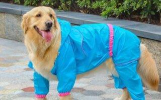 Зачем нашим собакам строгий ошейник, ринговка, дождевик или гигиенические трусики?