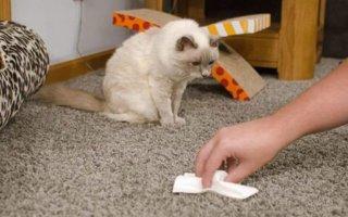Как убрать запах кошачей мочи с ковра?