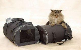 Клетка, сумка или рюкзак: все о переносках для котов