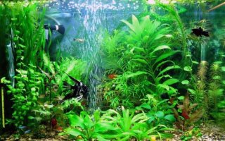 Аквариумный компрессор – подарим рыбкам кислород!
