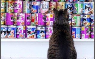 Корма для кошек с аллергией или пищевой чувствительностью