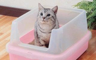 Лоточек для кота с высокими бортиками – уборка за питомцем без проблем!