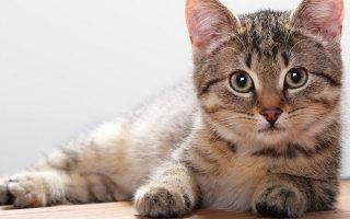 Способы борьбы с гельмитами у кошек – копилка советов ветеринара
