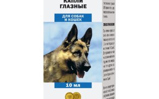 Глазные капли для собак: какие выбрать, как применять