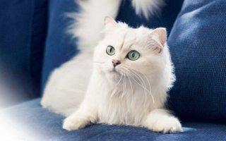 Рейтинг самых красивых и удивительных кошек
