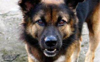 Как поступить в случае укуса собаки?