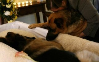 Как правильно похоронить домашнюю собаку