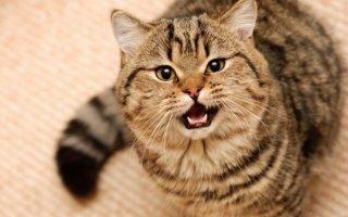 Кастрированный кот метит. Что делать?