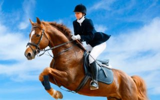 Как нужно тренировать лошадь?