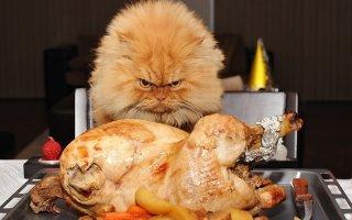 А нас и здесь неплохо кормят или самые толстые в мире коты