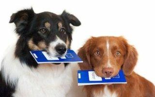 Как сделать документы РКФ на собаку