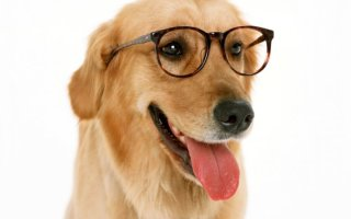 Как бельмо на глазу: лейкома и катаракта у собак
