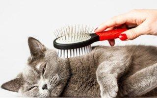Что делать если кот сильно линяет?