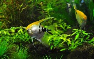 Химический баланс аквариума от А до Я