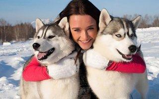 Чем отличаются Хаски от Лайки: на заметку неопытным собаководам