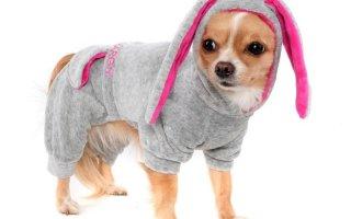 Как сшить комбинезон для собак?