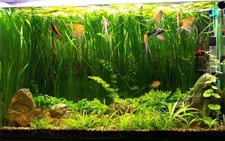 Все важное об освещении аквариума