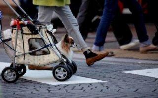 Чудо-приспособления для собак, которые облегчают жизнь