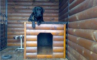 Мастер-класс по изготовлению вольера для собаки