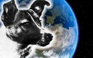 Лайка – первое животное, выведенное на орбиту Земли