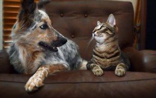 Ссоры между котом и собакой в прошлом: советы как подружить питомцев