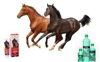 Алезан и ЗооВип – помощь больным суставам и мышцам лошадей