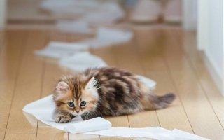 Глисты – грозные враги каждой кошки