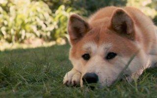 Раскрываем все секреты дерматита у собаки