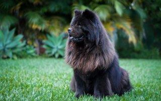 Рекомендации по лечению синдрома заворота желудка у собак
