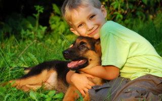 Выбираем лучшую породу собак для детей – рейтинг популярных видов