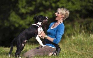 Как отучить собаку или щенка прыгать лапами на хозяина и других людей