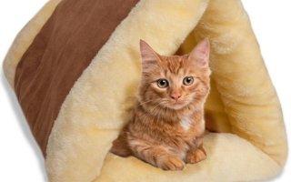 Как выбрать лежанку для кошки?
