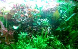 Внешние фильтры для аквариума: выбираем и устанавливаем