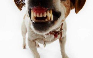 Умеют ли собаки улыбаться – рейтинг веселых пород
