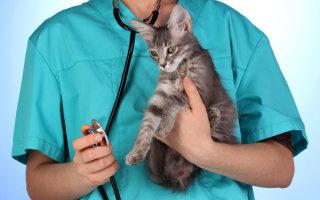 Как помочь кошке победить вирусный перитонит?