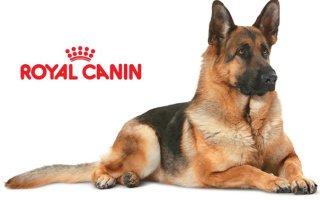 Все о многообразии собачьих кормов Royal Canin