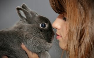 Приучаем маленького кролика к ласкам и рукам