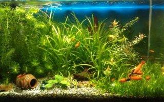 Все разнообразие аквариумных грунтов