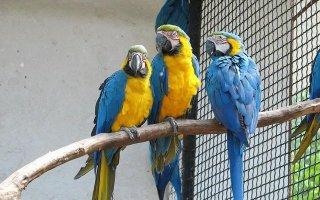 Как правильно выбрать попугая без посторонней помощи