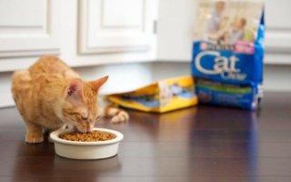 Корм для кошек премиум класса