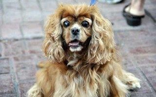 Кастрация собак: ЗА и ПРОТИВ