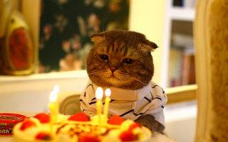 Сколько живут кошки в домашних условиях, и как определить возраст кошки?