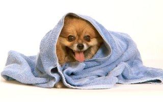 Популярные шампуни для собак на все случаи жизни