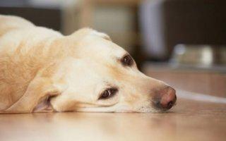 Самые частые заболевания желудка и кишечника у собаки