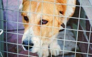 Выбираем надежную и комфортную клетку для собаки